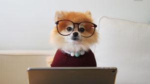 Online therapy Thought Piece. A photo of a dog wearing glasses sat behind a laptop